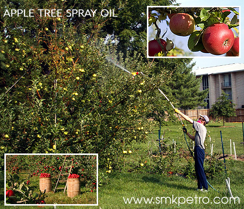 APPLE TREE SPRAY OIL